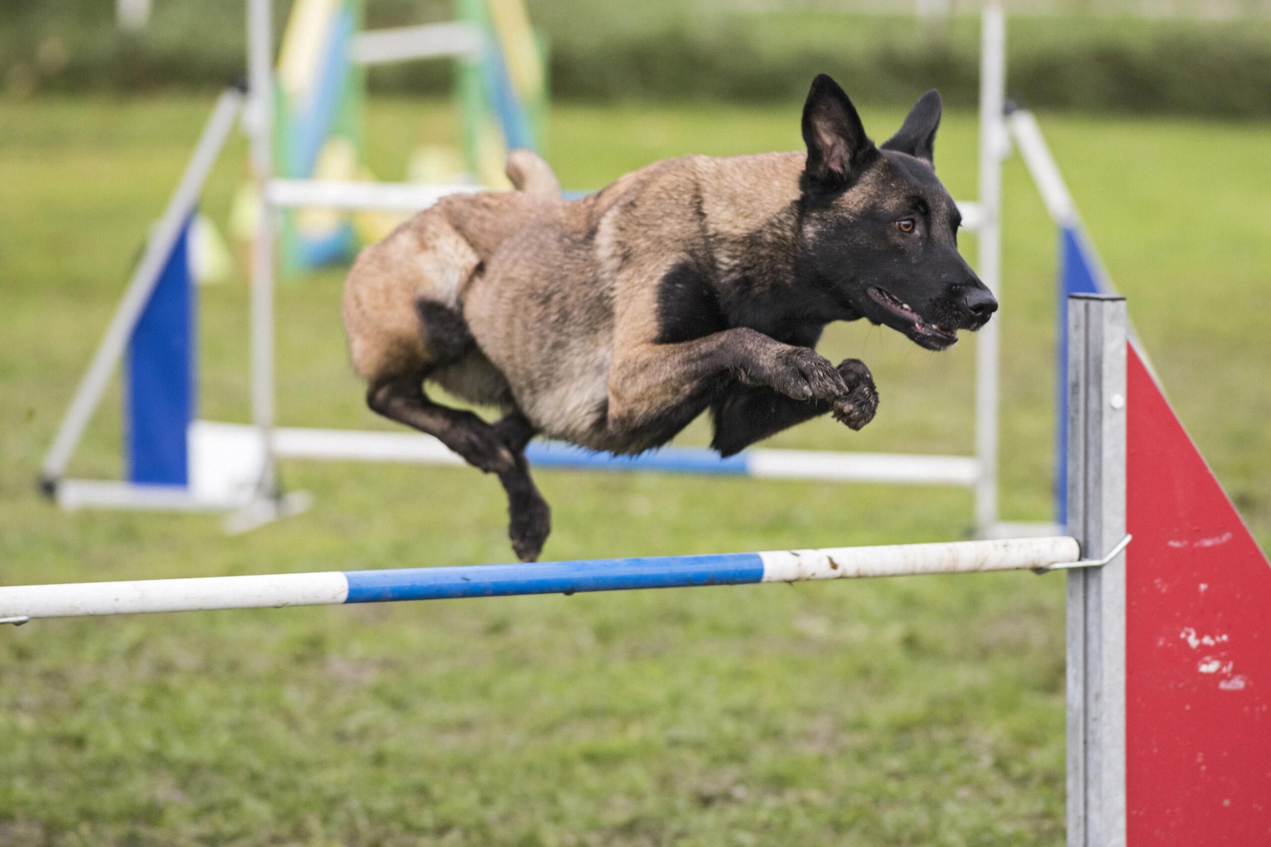 Mein Hund springt nicht gut – Hab ich ein Problem oder nicht